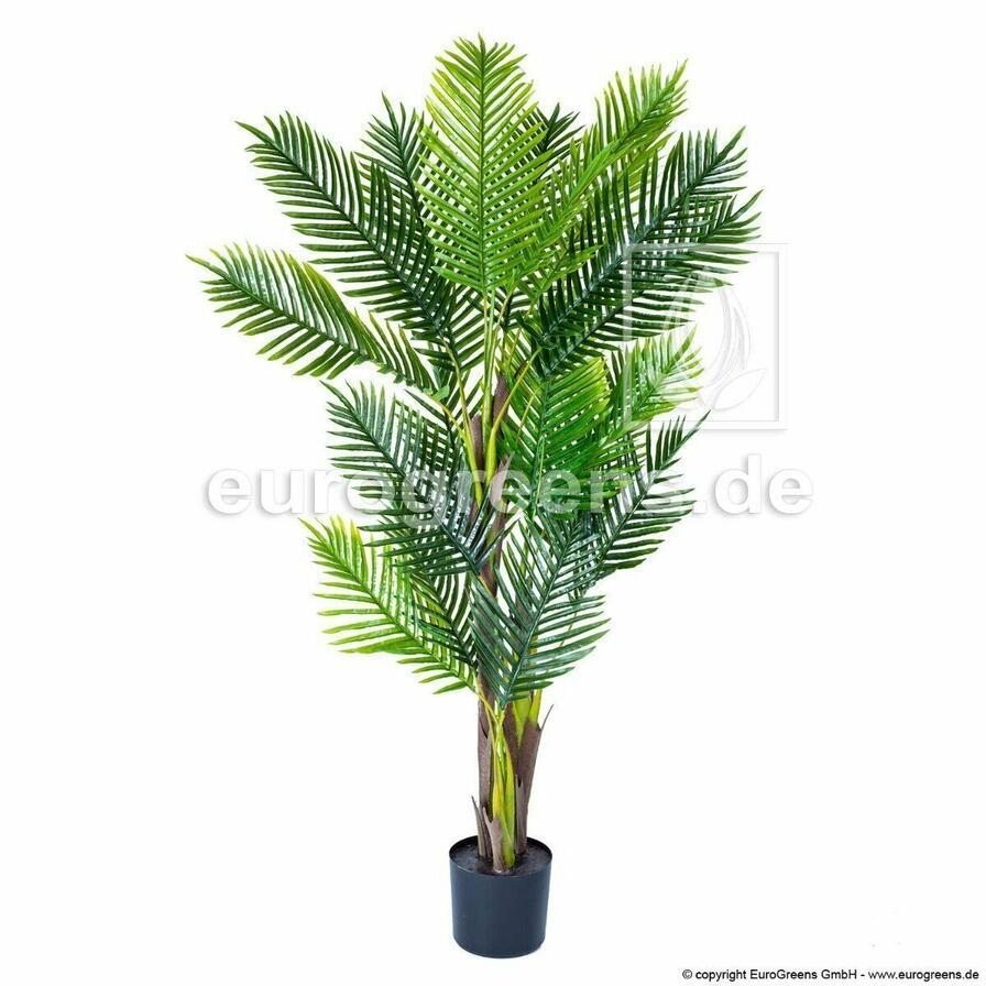 Palma Areca vo veľkosti 170 centimetrov.