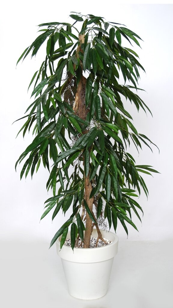 Umelý strom Longifolia Pendula (160cm)