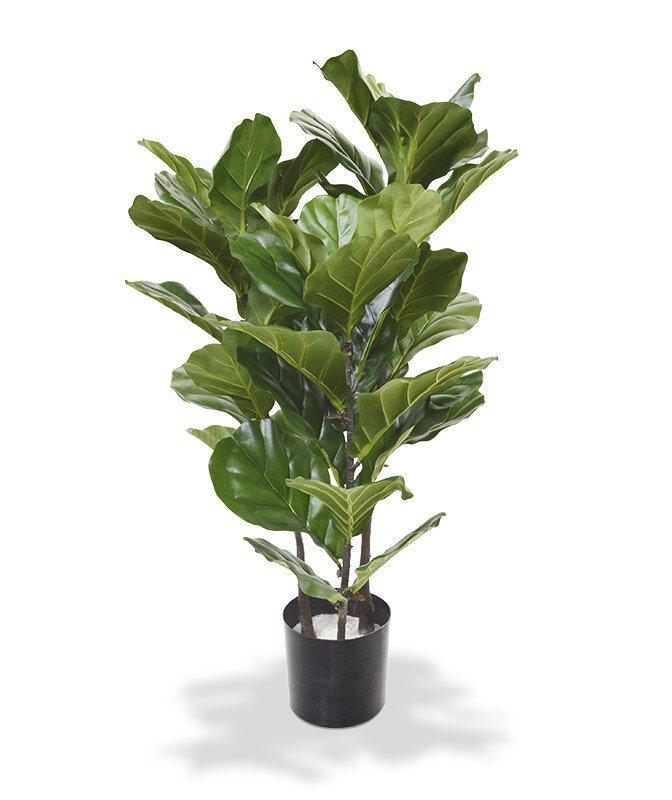 Umělá rostlina lyrata 95 cm