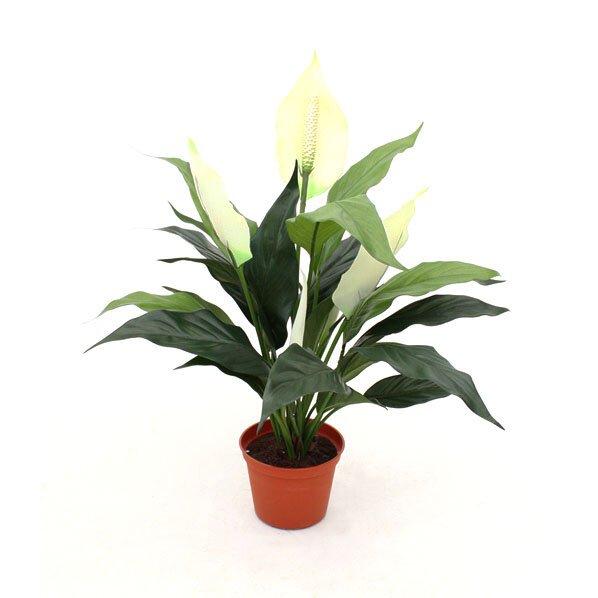 Umelá rastlina Lopatkovec - Spathiphyllum 50 cm