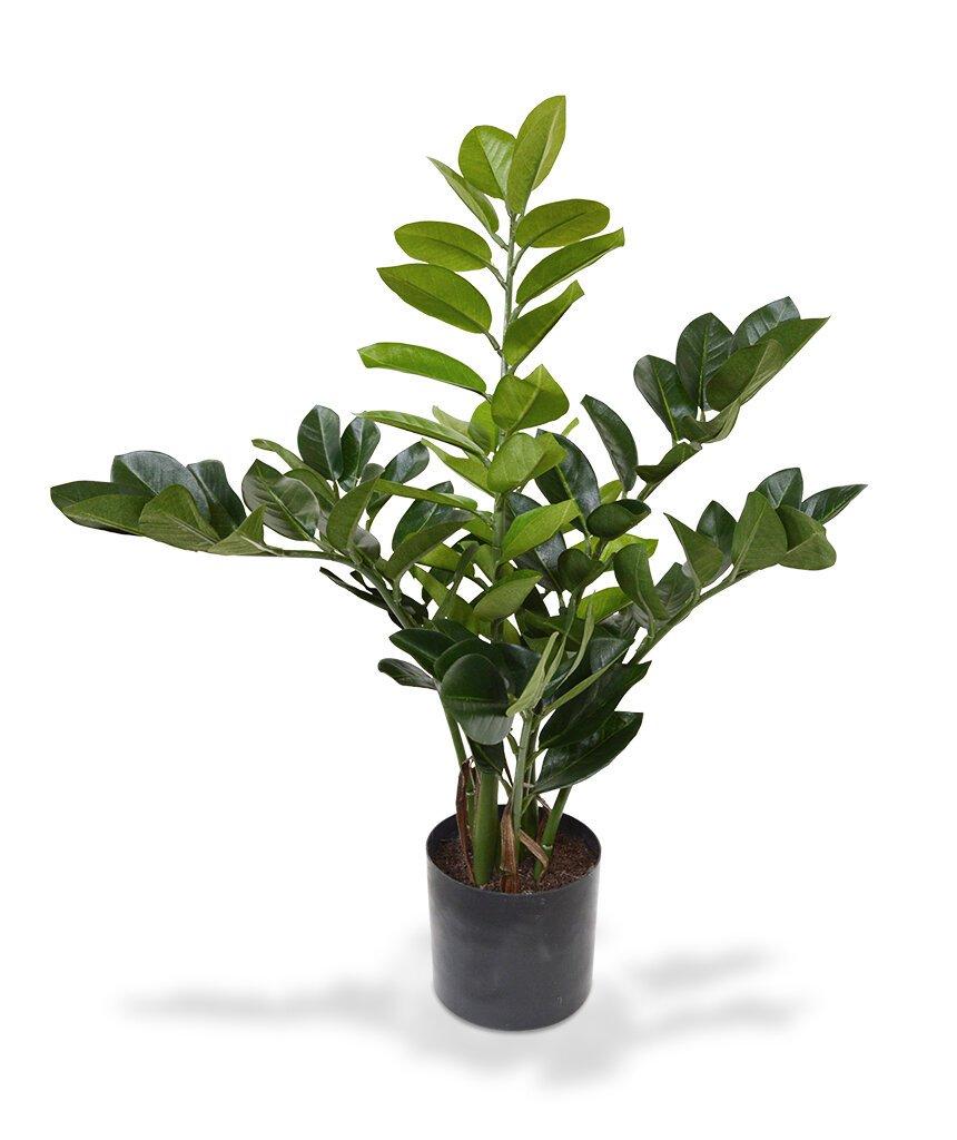 Umelá rastlina Zamio 55 cm