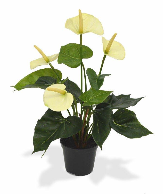 Umelá rastlina Antúria 40 cm v kvetináči - biela