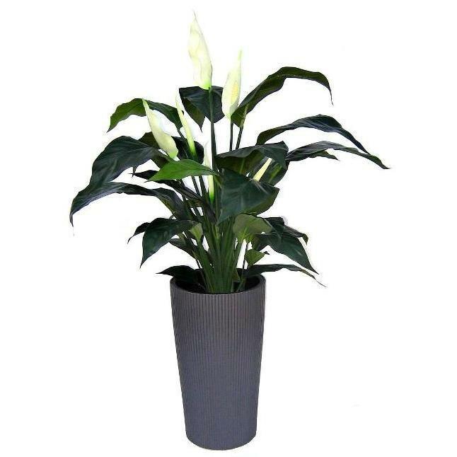 Umelá rastlina Spathiphyllum Deluxe 80 cm