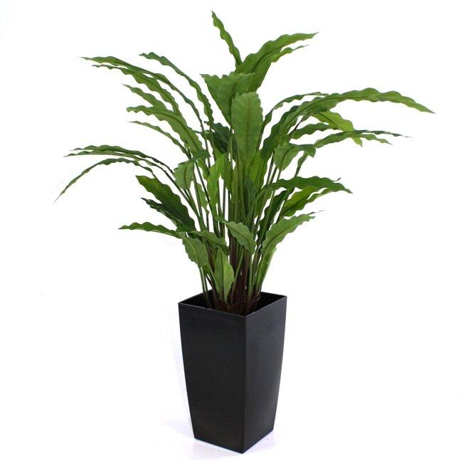 Umělá rostlina Kalatea 60 cm