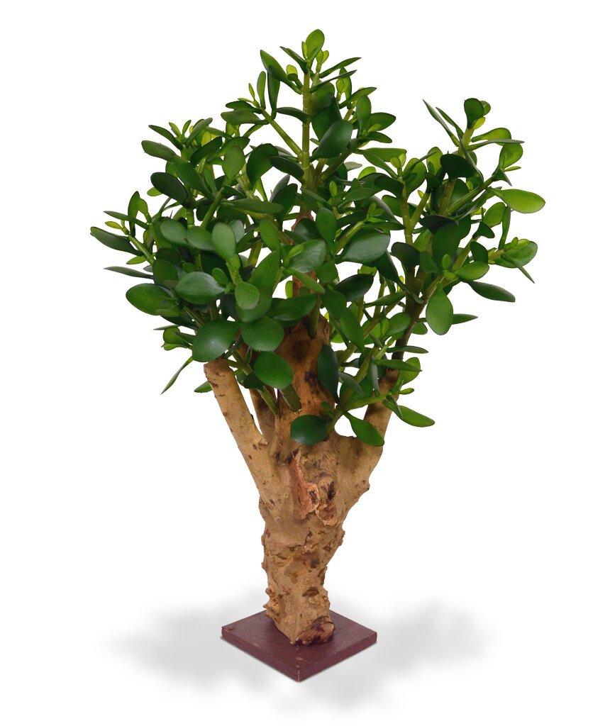 Umělá rostlina Crassula 60 cm