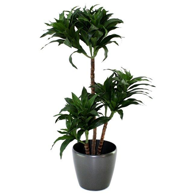 Umělá rostlina Draceana fragrans 85 cm