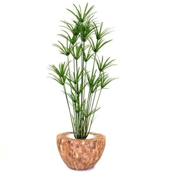 Umelá rastlina Papyrus Deluxe 175cm