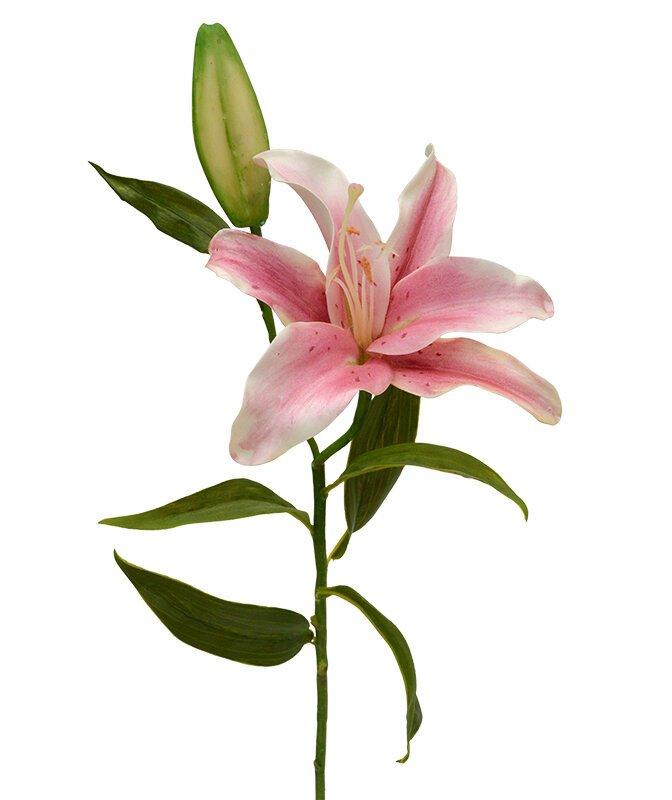 Umelá vetva Ľalia Deluxe 55 cm - ružová