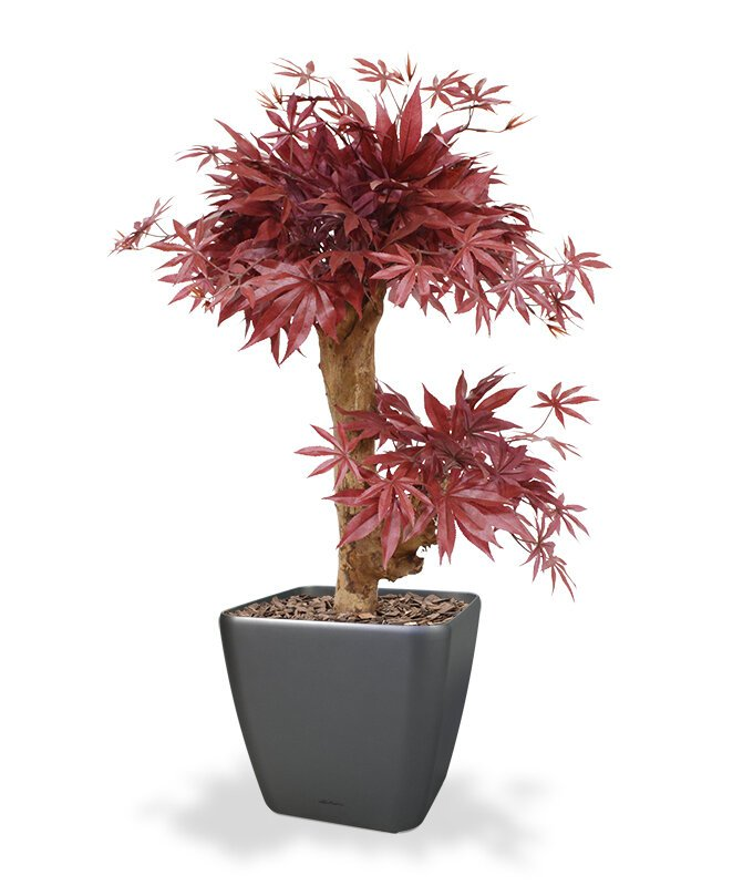 Umělý strom Bonsai Acer 60 cm - bordovo červený