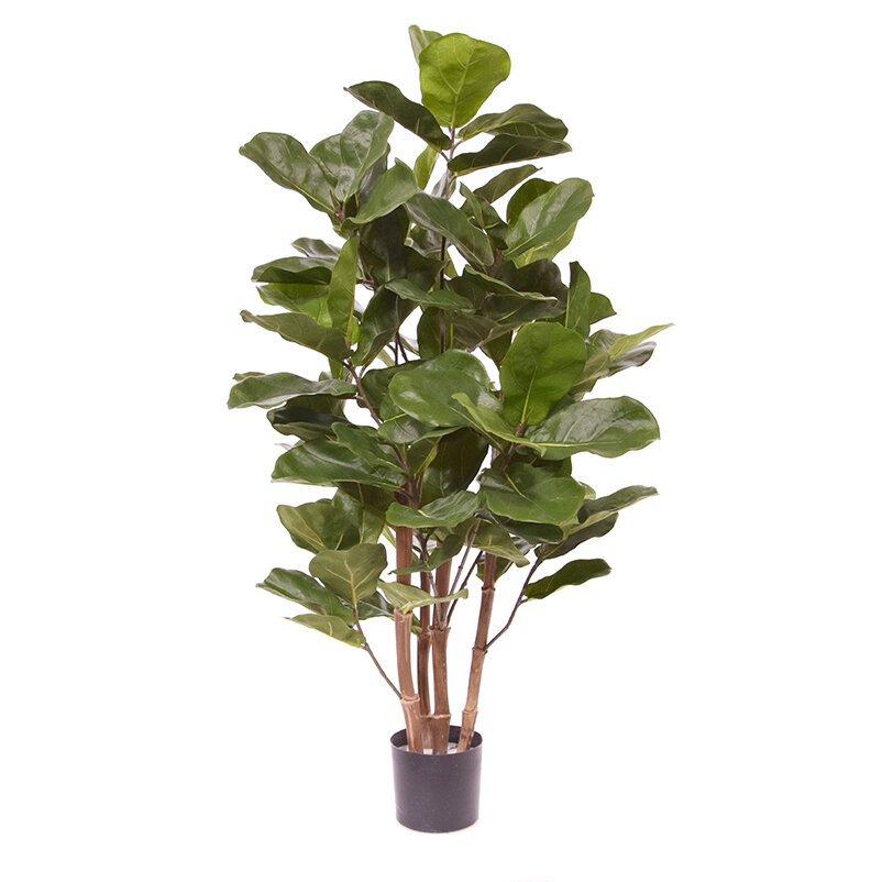 Umelá rastlina Royal Lyrata 105 cm