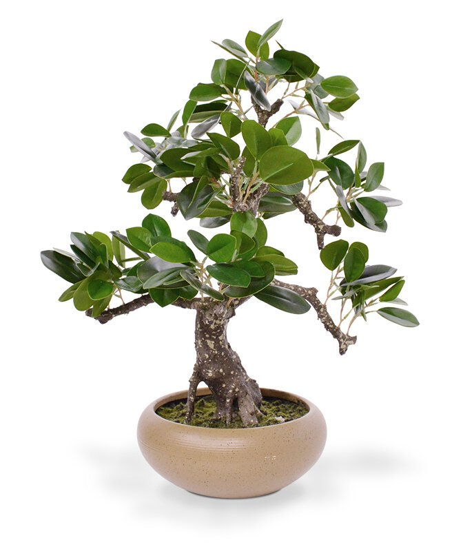 Umelý Ficus Retusa Bonsai 50 cm