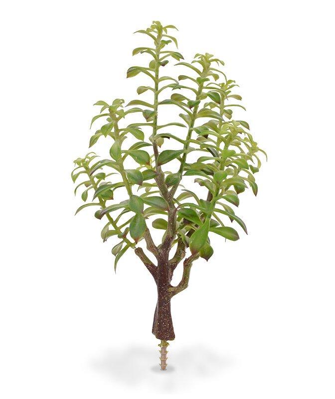 Umělá rostlina Crassula Bonsai 40 cm