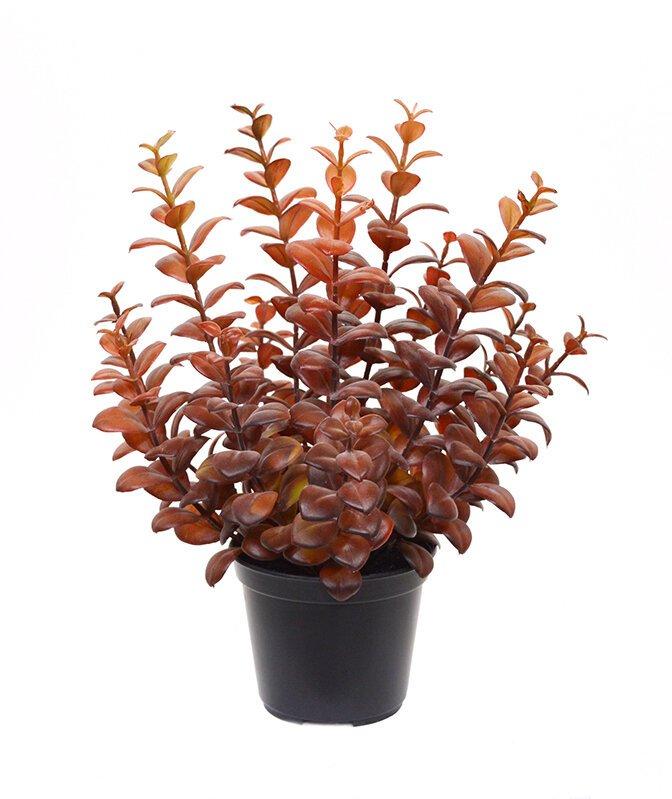 Umelá rastlina Eukalyptu 30 cm vínová farba