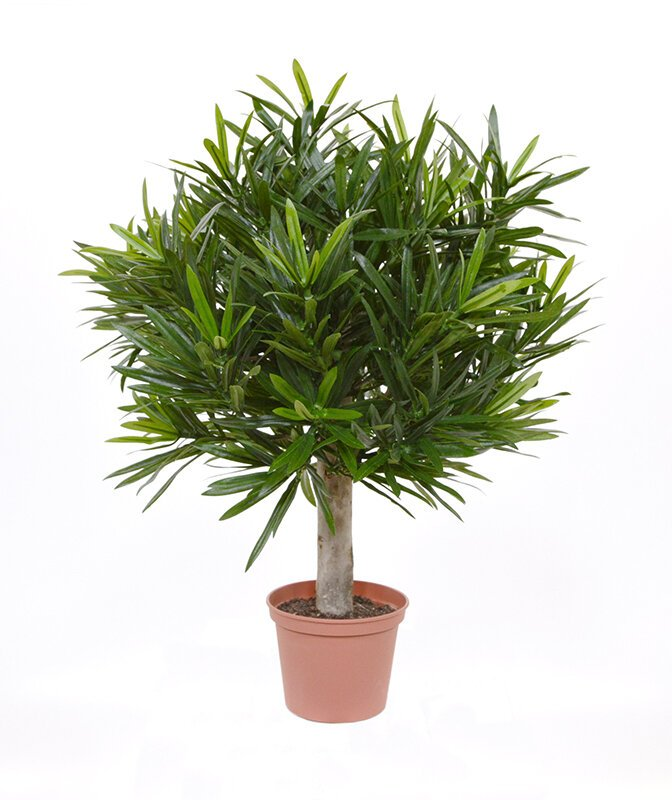 Umělý strom Podocarpus ve tvaru koule - 35 cm