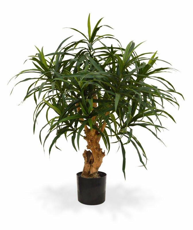 Umělá rostlina Dracena Reflex 75 cm