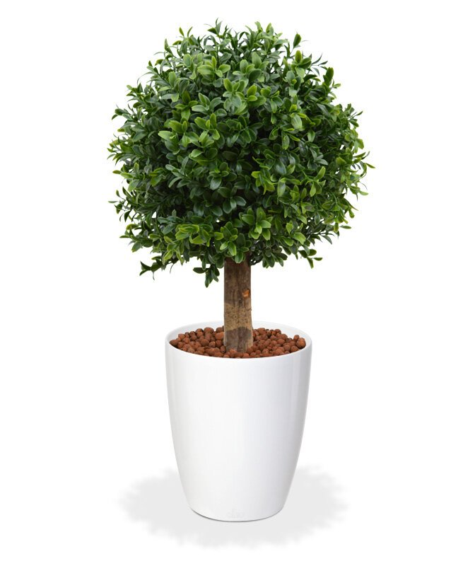 Umělý buxusový strom Koule 25 cm
