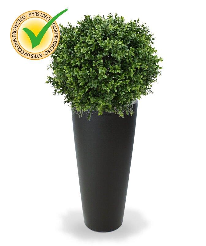 Buxusová rastlina Deluxe 50 cm