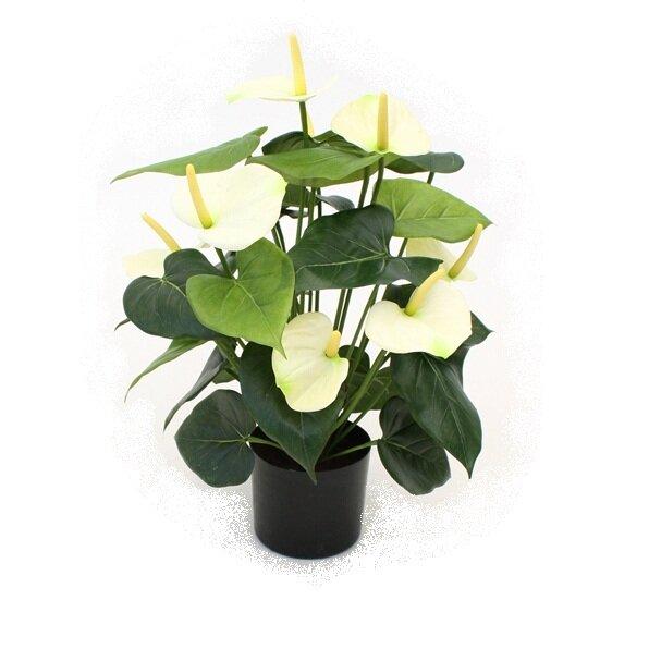 Krémová Anthurium Deluxe 50cm