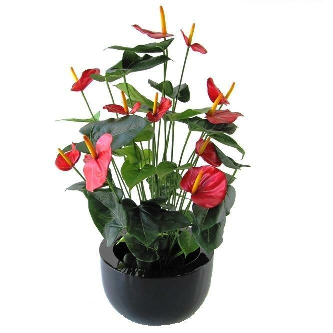 Umělá rostlina Anthurium červená 80 cm