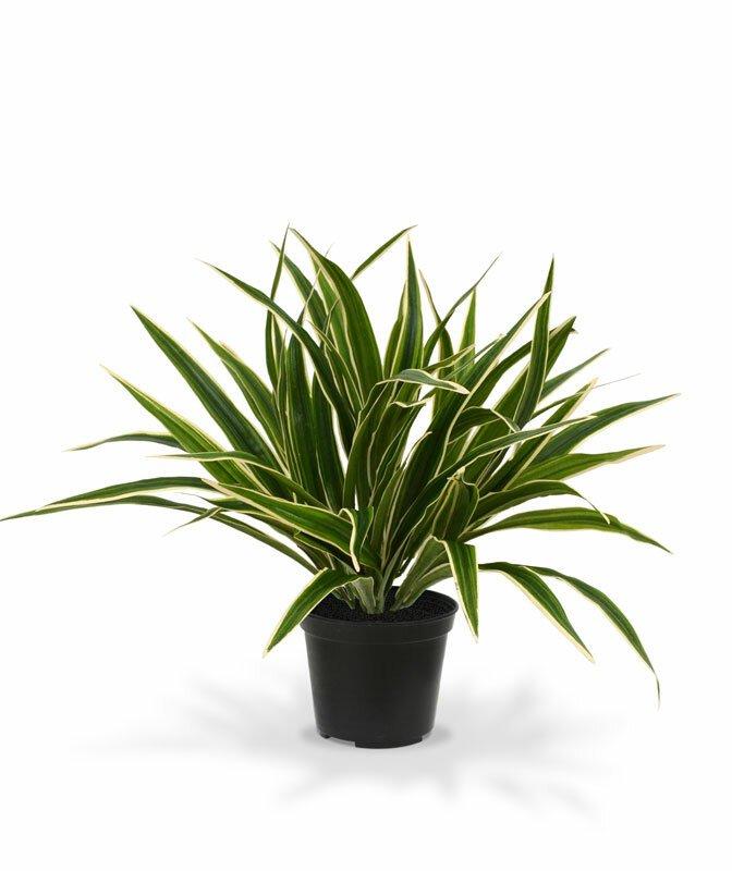 Umelá rastlina Chlorofyt  30 cm