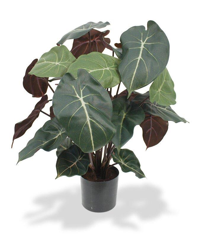 Umelá rastlina Syngonium 60 cm