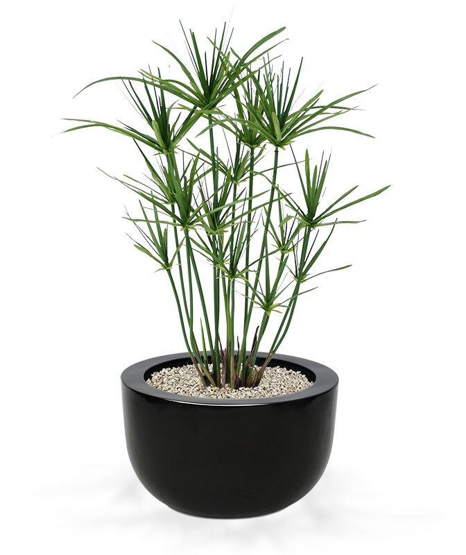 Umělá rostlina Papyrus 65 cm