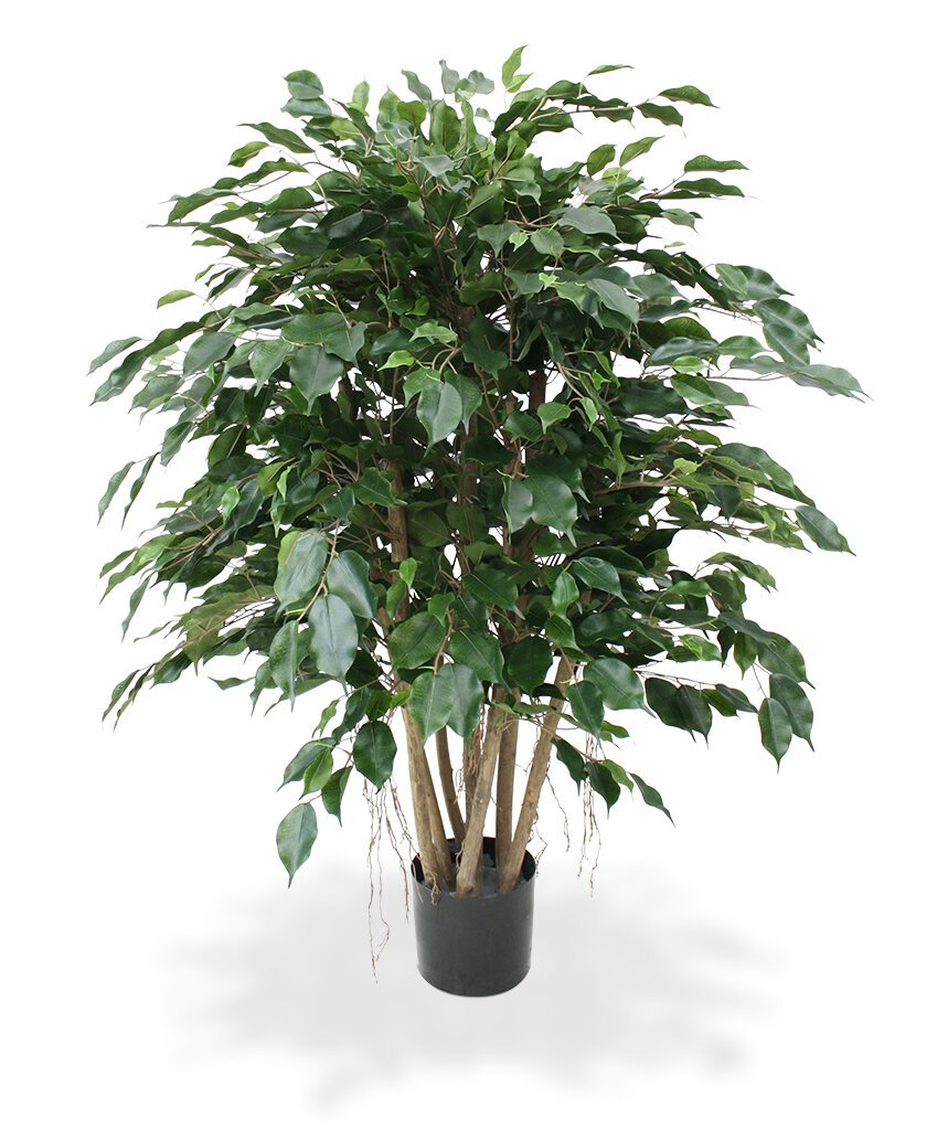 Umelá rastlina Ficus Exotica XL 110 cm