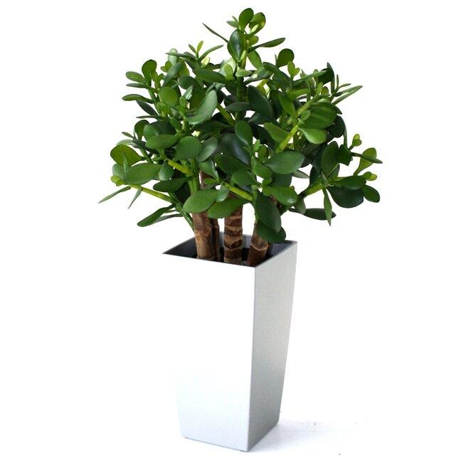 Umelá rastlina Crassula 40 cm