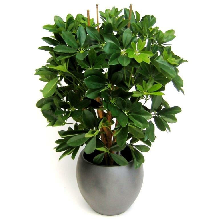 Umelá rastlina Schefflera 80 cm