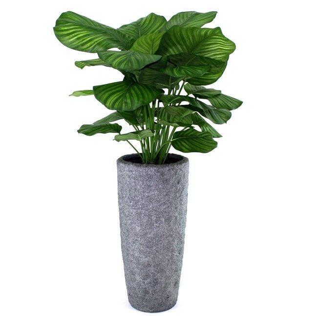 Umělá rostlina Kalatea fasciata 80 cm