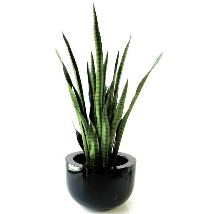 Umělá rostlina Sansevero XL 100 cm