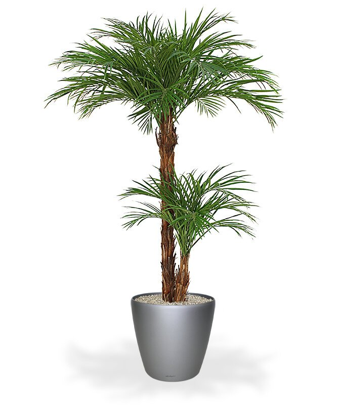 Luxusná umelá palma Areca 225 cm