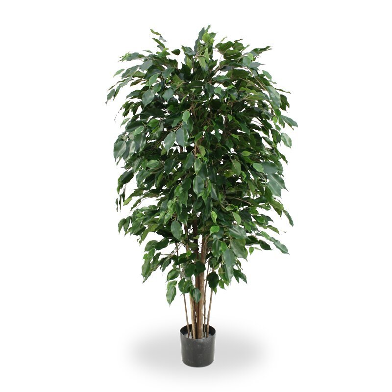 Umělý Ficus Exotica 150 cm