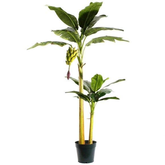 Umělá palma Banánovník 240 cm