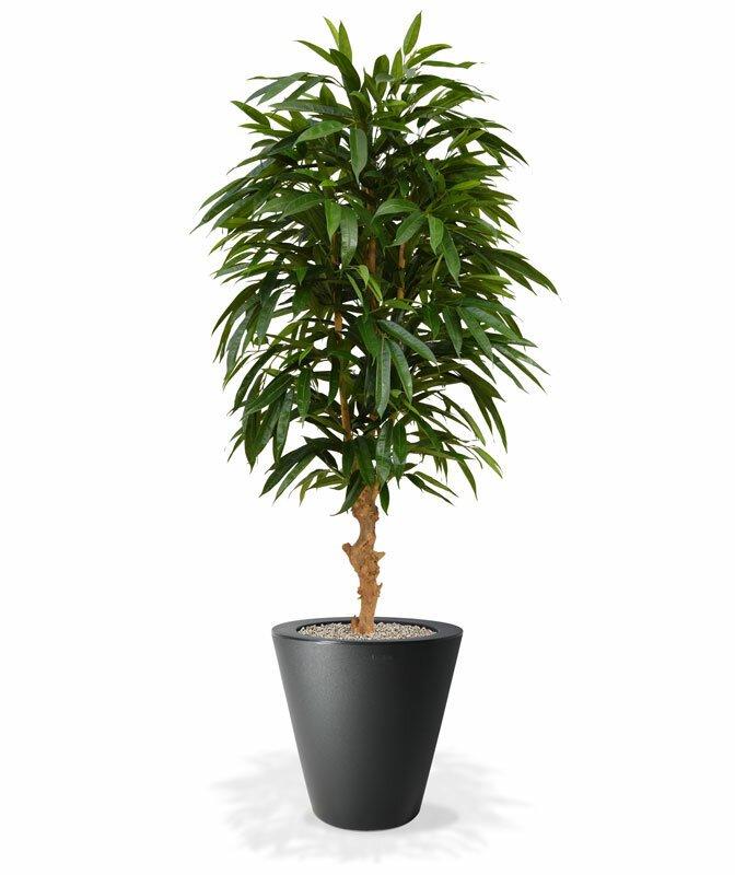 Umělý strom longifolia Royal 165 cm