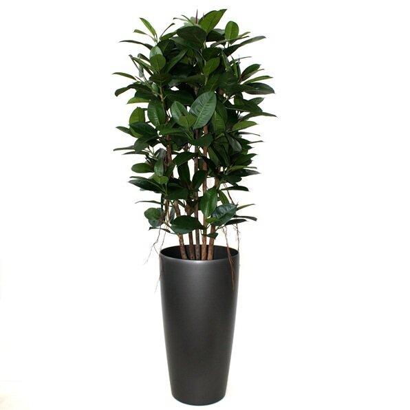 Umělá rostlina Philodendron 155 cm