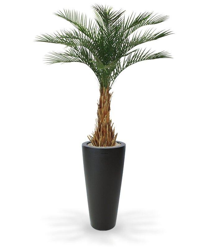 Umělá palma datlová 180 cm