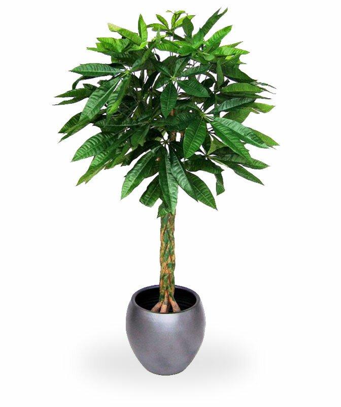 Umelá rastlina Pachira Deluxe 120 cm