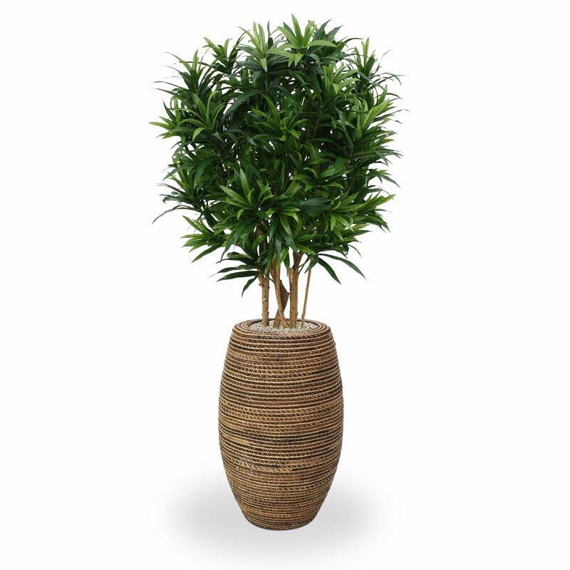 Umělý strom Draceana Reflex 150cm - zelený