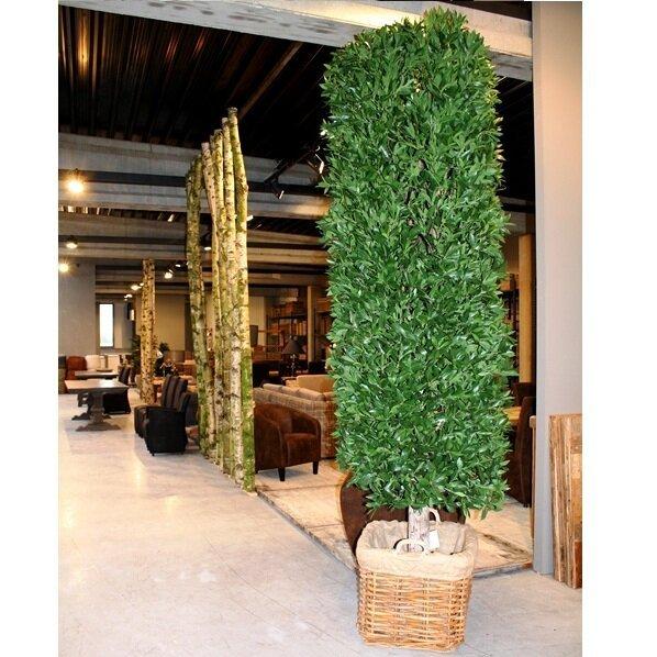 Umelý Vavrínový strom DeLuxe 325 cm