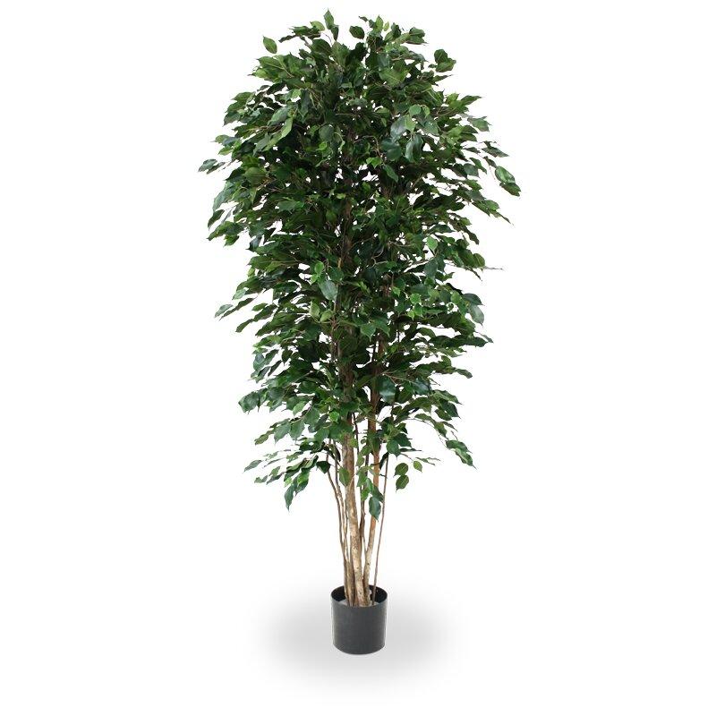Umělý Ficus Exotica Deluxe 210 cm