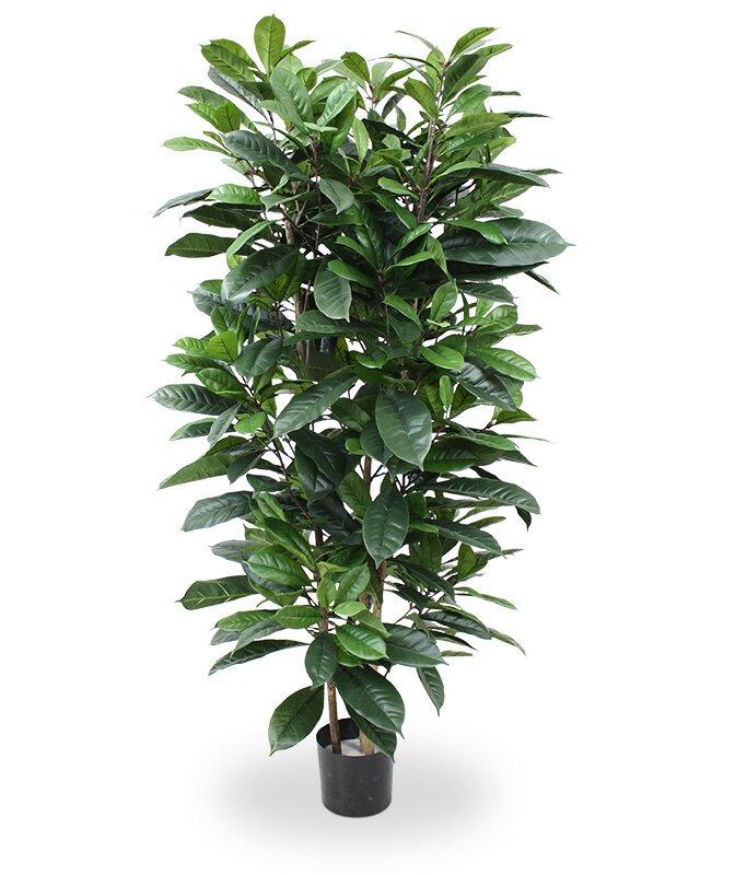 Umělý strom Fíkus cyathistipula 160 cm