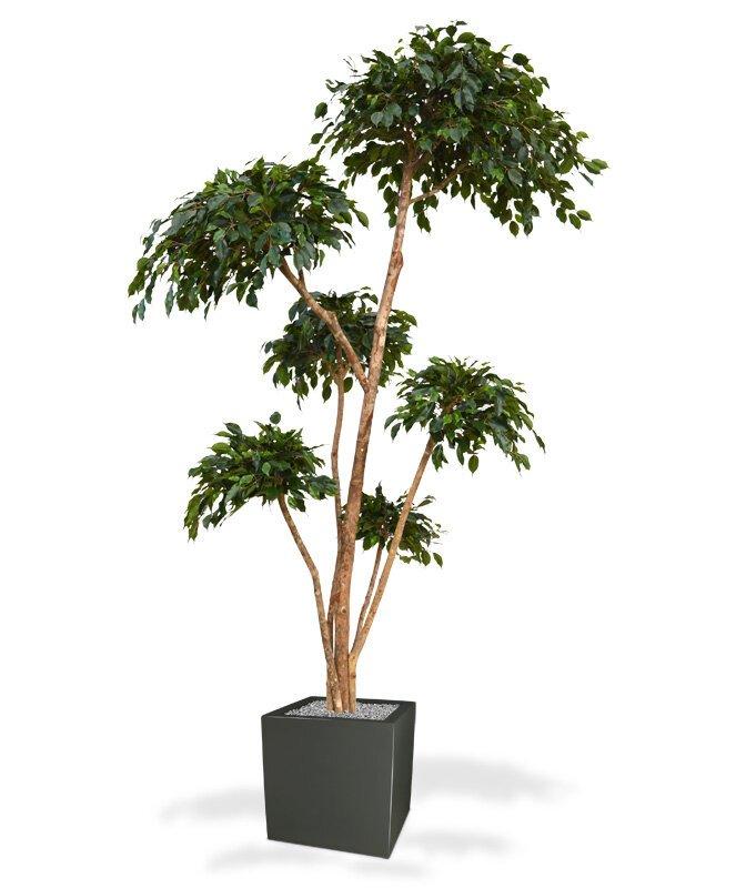 Umělý strom Fíkus Exotica 300 cm