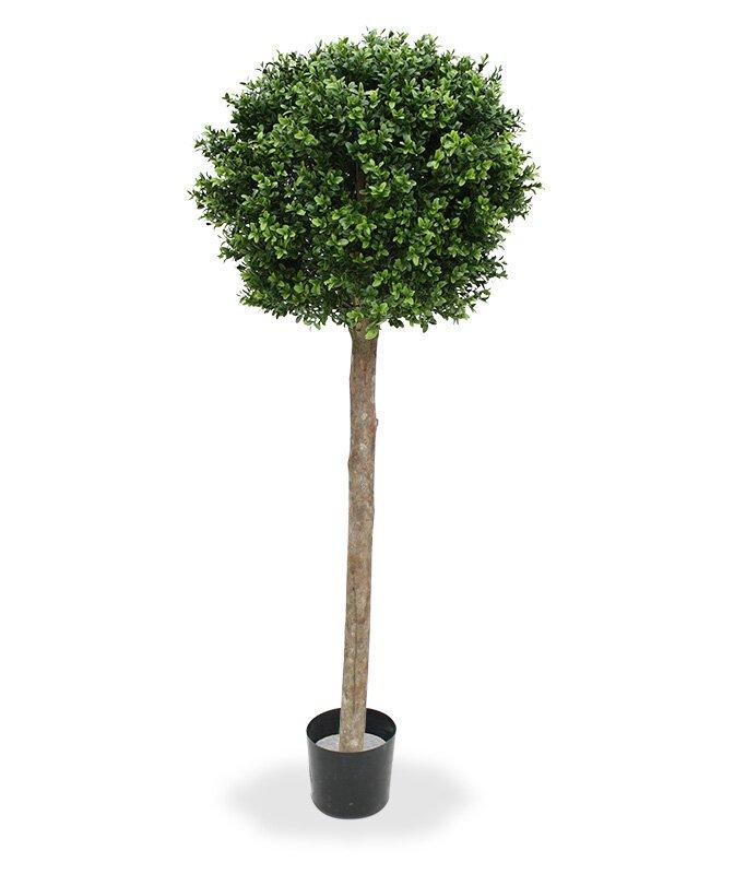 Umělý strom Buxus s kmenem pravého dřeva 140 cm