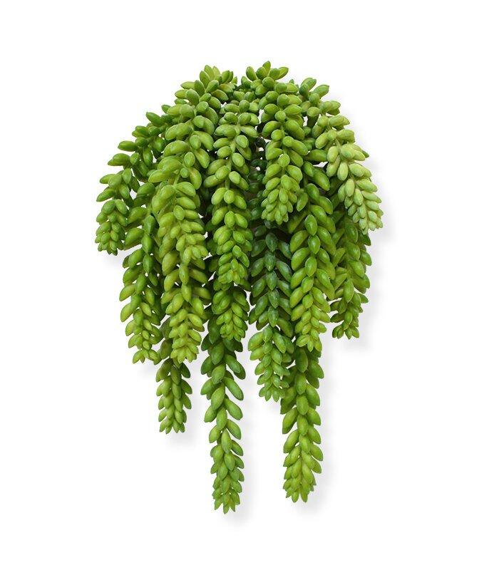 Umelá rastlina Donkey Tail 30 cm