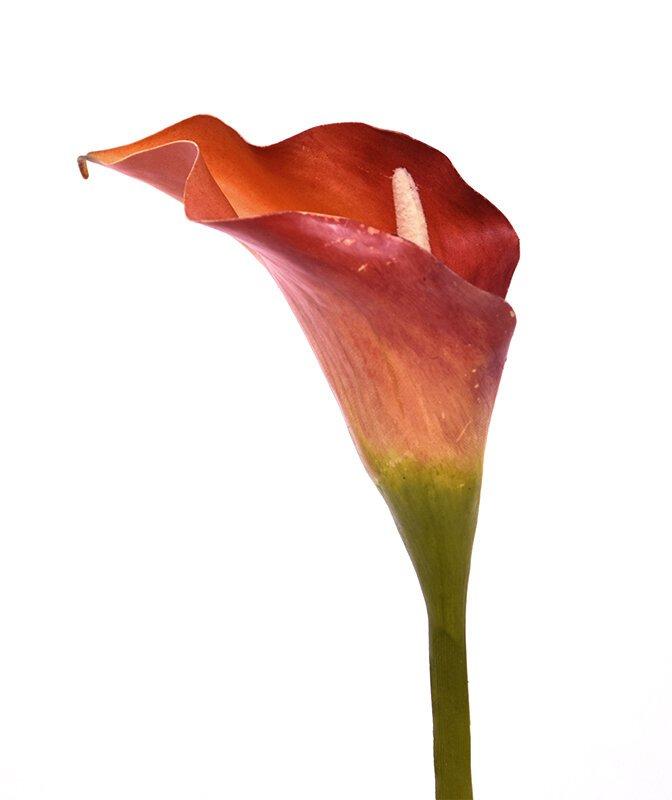 Umělá květina Kala 55 cm - oranžová