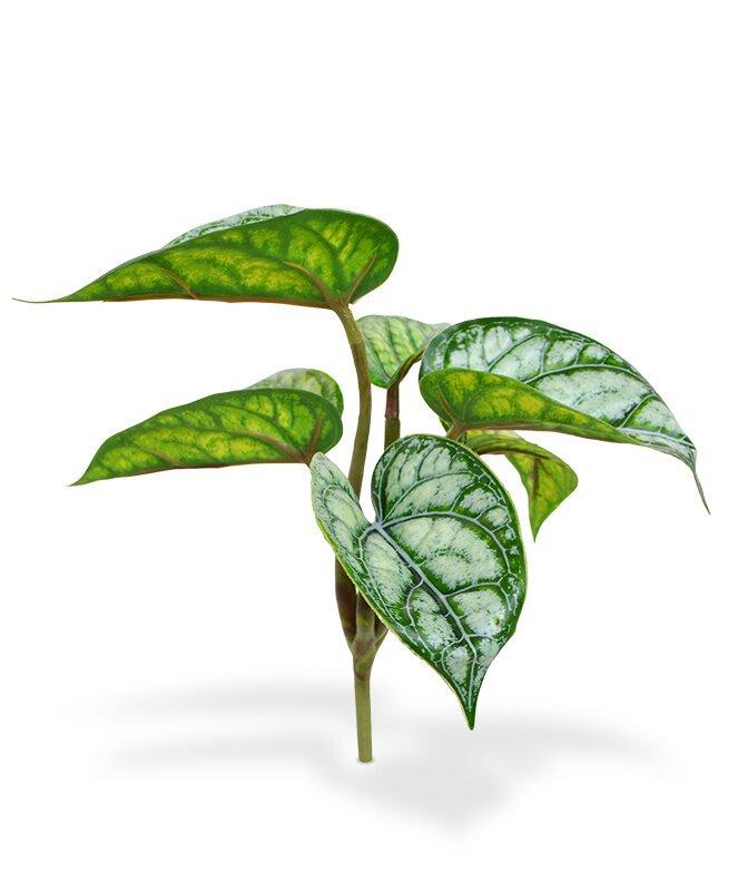 Umělá rostlina Fittonia - Hadí kůže 20 cm