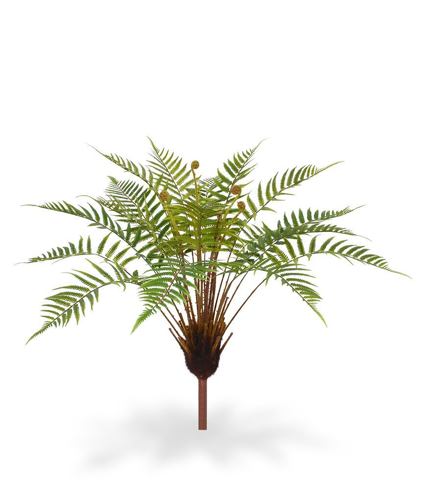 Dekorativní rostlina Adiantum  75 cm