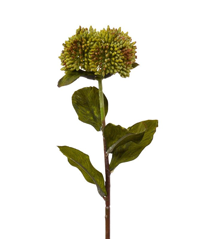 Umělá okrasná větev Sedum 50 cm - zelená