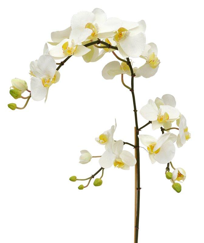 Umelá vetva Phalaenopsis XL 110 cm - biela